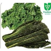 Black or Green Kale  - $2.99/bunch